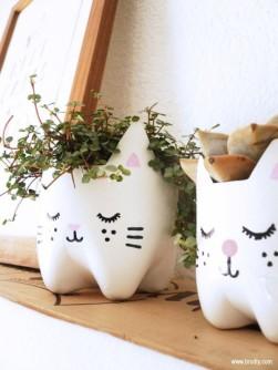 cat-bottles-600x800