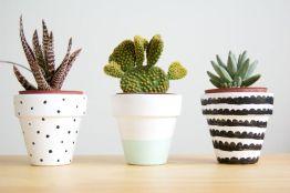 {Pins of the week} Des cactus par milliers!